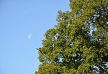 Amenore Telat Datang Bulan Selama 3 Bulan