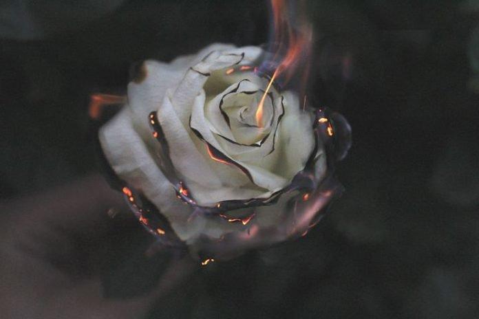 Api Cinta