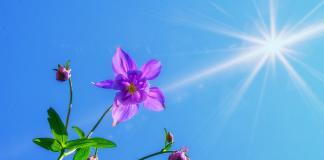 aias sayyidina muhammad