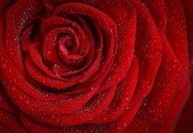 10 Sebab Pengundang Cinta Allah Ustadz Abu Umar Indra