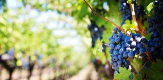 Dokter Kita Spesialis Kandungan Bahaya Hamil Anggur