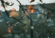 Menyingkap Kerancuan 16 Faidah Memahami Tauhid dan Syirik